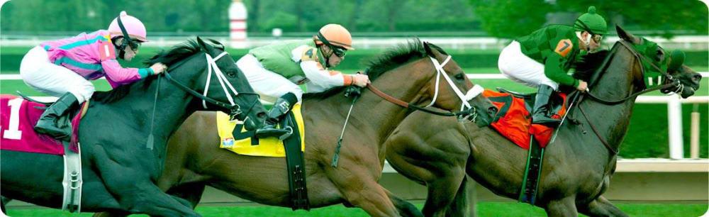 Erityyppiset hevoskilpailut